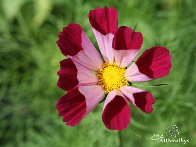 IMG_0561-blomst_400x300