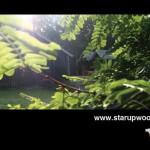 starupwood postcard